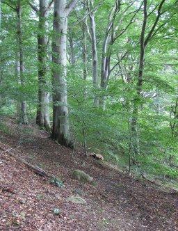 Sluttningf med lövträd i skir grönska