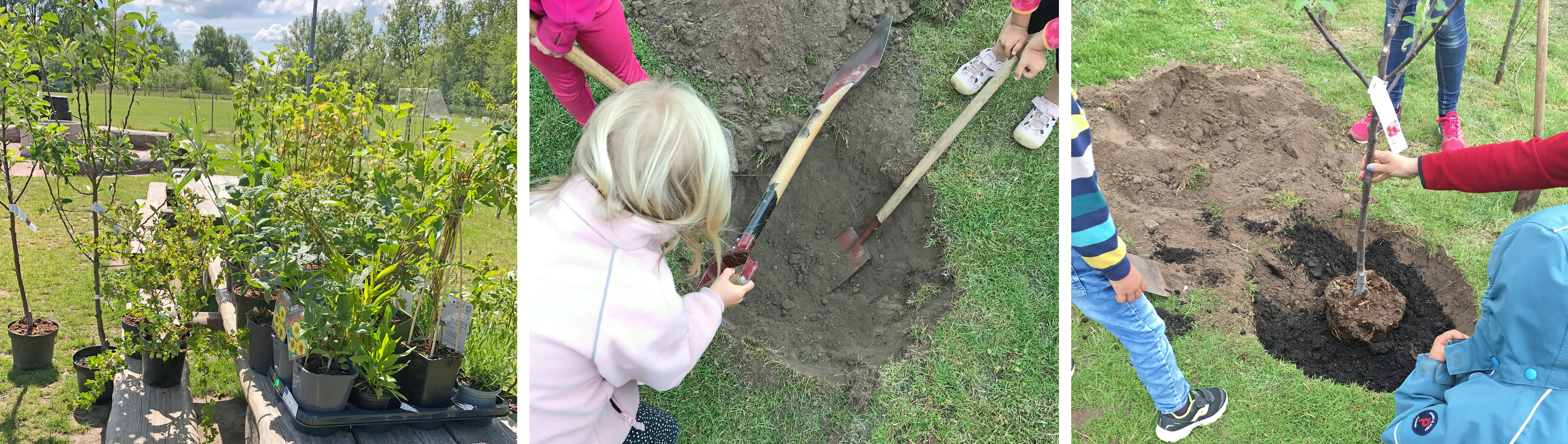 Tre bilder. Den första visar alla växter när de levererades. Den andra visar när barnen gräver en grop till ett träd. Den tredje visar när trädet sätts på plats.