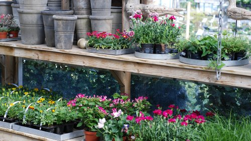 Guidad tur på Flyinge plantskola