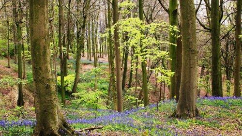 Föreläsning: Möt våren utmed en stig
