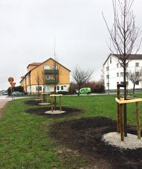 Stora torg i Marieholm med nyplanterade träd