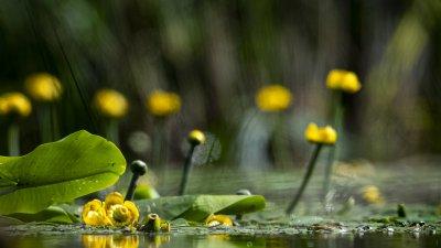 Tyck till om vårt naturmiljöprogram!