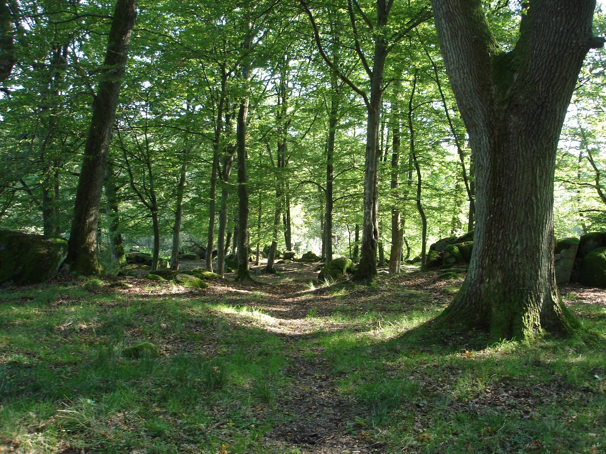 Natura 2000-området med den utslocknade vulkanen Jällabjär hotas inte längre av gruvdrift