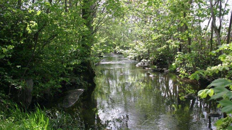 Naturmiljöprogram