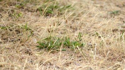 Vårsolen ökar risken för gräsbränder