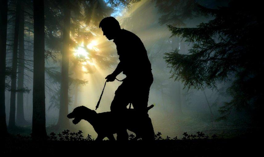 Hundar i naturen