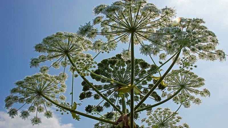 Rapportera invasiva växter